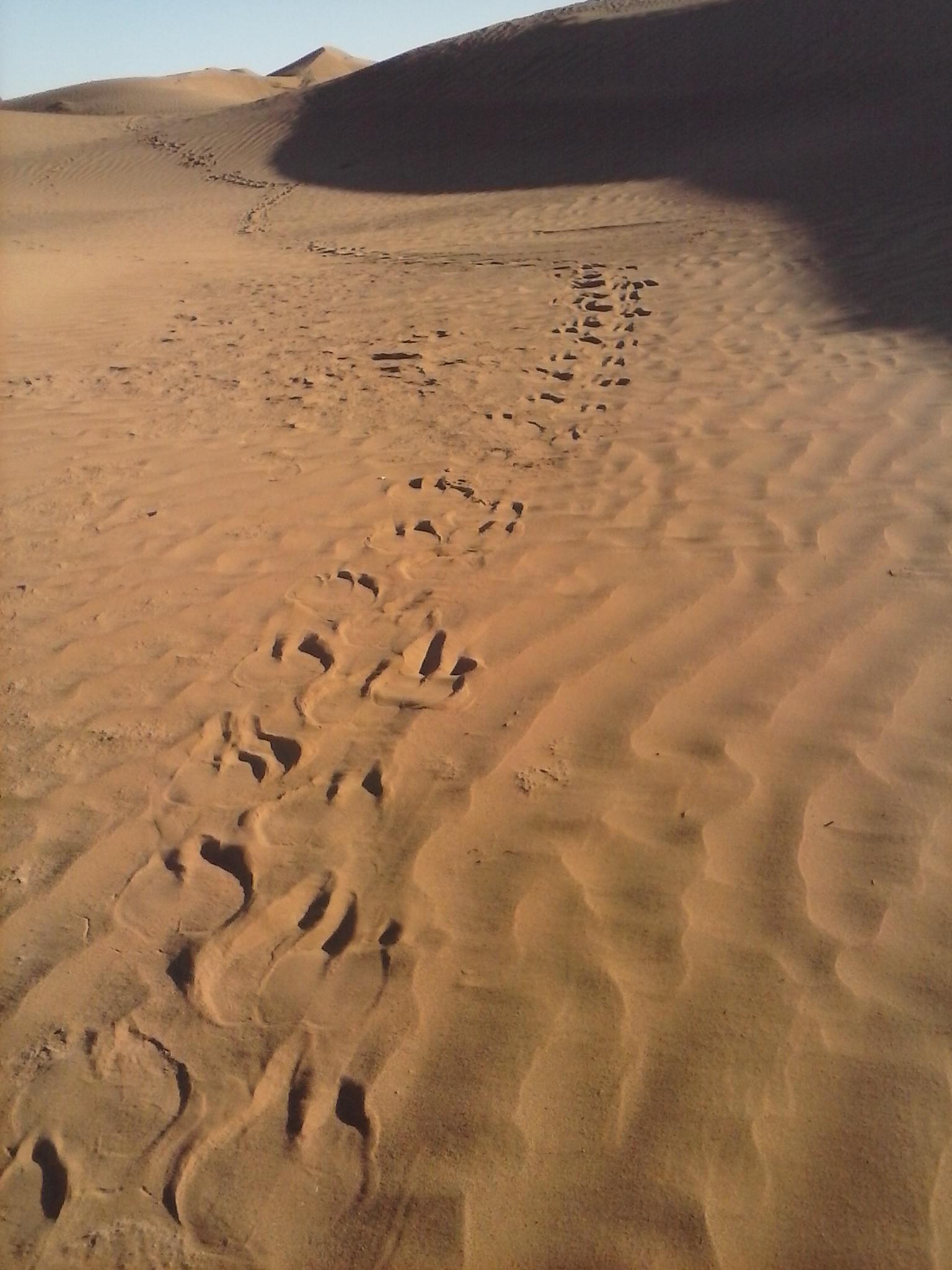 M'hamid el Ghizlane, dans les dunes