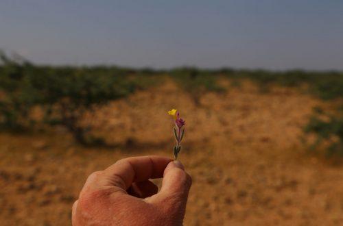 Article : Boulogoudoute, mon village en Somalie